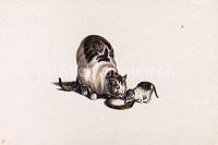 Katzen am Milchgefäss